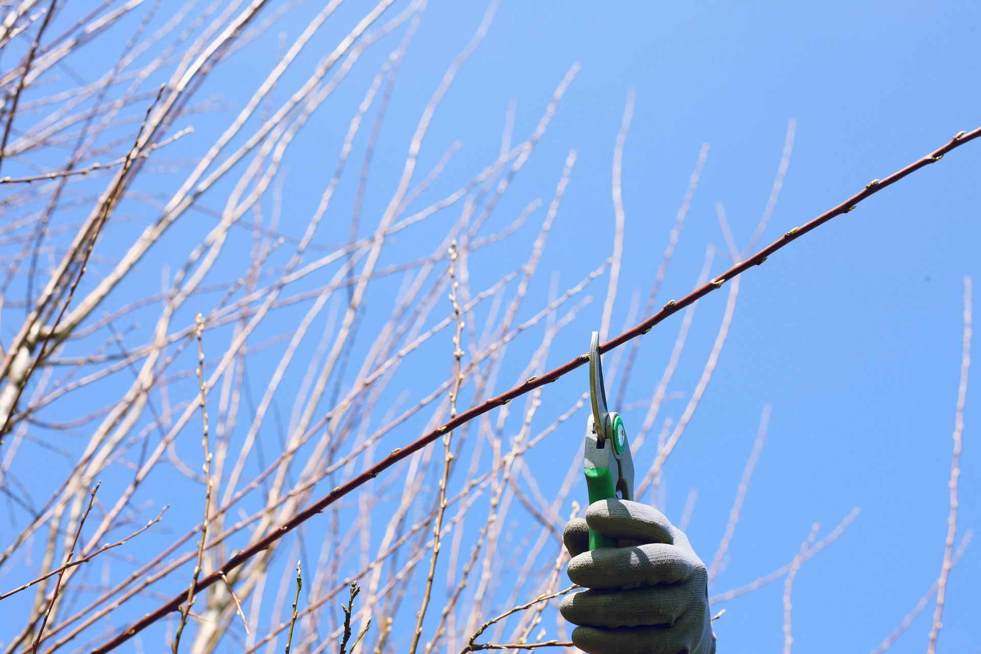 Coupe et élagage arbre arbuste haie réalisé par La Main Verte.