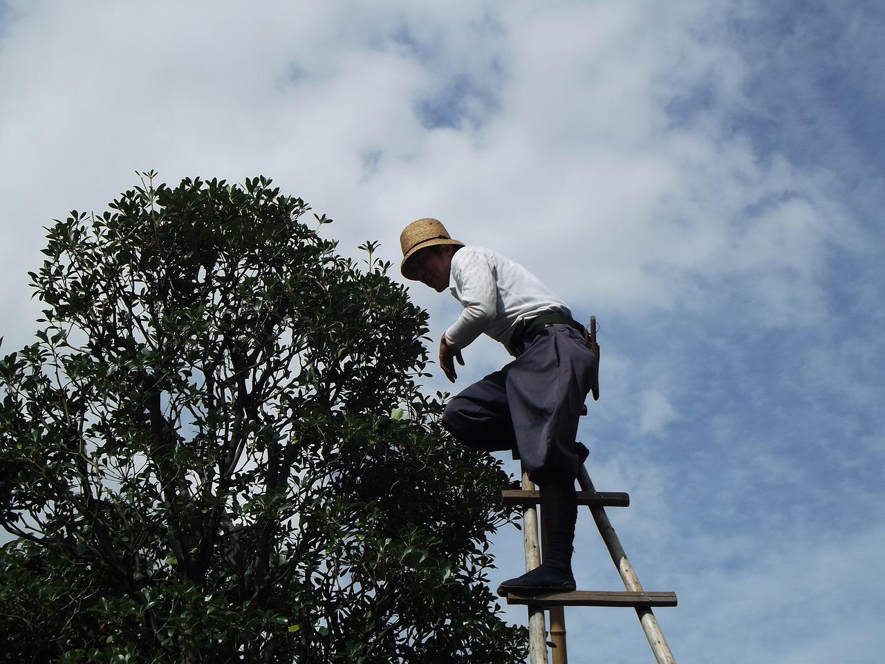 élagage arbre Jardinier La Main Verte