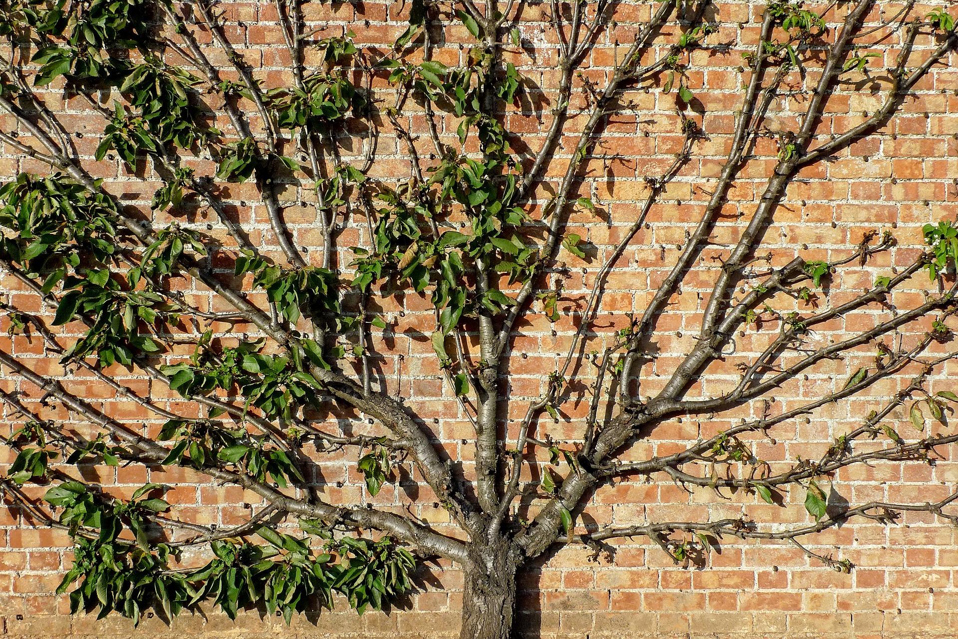 Entretien d'élagage arbre Jardinier La Main Verte